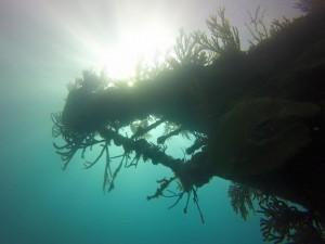 Don't lose your sense of wonder #SCUBA #BermudaTriangle